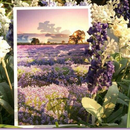 30pcs lot Romantic Provence Gorgeous Landscape Flowers of French city Lavender greeting Postcard